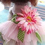monicanine Sommer Pet Hund Daisy Blume Gaze Tutu Kleid Rock Puppy Katze Schleife Prinzessin Kleidung