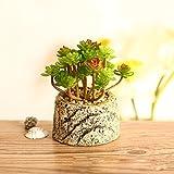 Beito Topf Garten Ornamente Bonsai kreative Pflanzen Simulation Keramik Vasen fleischigen...