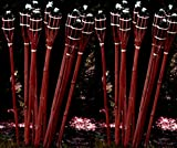 24 Stück Gartenfackel Bambusfackel 90 cm in Mahagoni Farbe aus Bambus für draussen inkl Docht + Tank / Ölfackel Gartenfackel Lampe Öllampe Gartenfackeln / STAR-LINE®