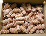Feuer-Anzünder 500 Stück Holzwolle Wachs Grillanzünder Kaminanzünder