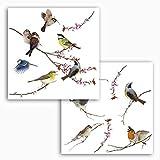 Komar - Window-Sticker BIRDS - 31 x 31 cm - Fensterdeko, Fenstersticker, Fensterfolie, Vogel,...