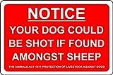 Sicherheitsschild Your Dog Could be Shot if Found Among Sheep Farm Livestock, 1,2 mm, starrer...