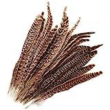 MWOOT 20 stück Fasan Federn, 25-30cm/ 10-12 Zoll Länge Fasan Schwanzfedern, Hutfeder, Natural Craft Feather