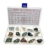 sharprepublic 15Stk. cNatursteine Dekosteine Mineralien Steine mit Box zum Lernen und Spaß
