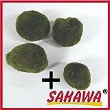 Mooskugeln im Set 3-5 cm, Cladophora aegagropila, Cladophora-Ball , Marimo, Algenball,...