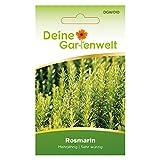 Rosmarin Samen (Mehrjährig) | Rosmarinsamen | Saatgut für Rosmarin-Pflanzen | Kräutersamen