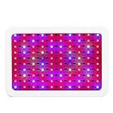 LED Grow Light 1000W Single Control Pflanzenleuchte mit 100LEDs(欧规)