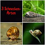 aquarz 3er Schneckenputztrupp Posthornschnecken Blasenschnecken Turmdeckelschnecken für das...