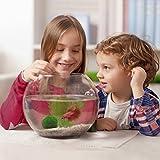 Aubess Aquariumdeko Mooskugel mit Garnelen und Schnecken