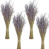 Timoo Getrocknete Lavendel-Bündel, 100% natürlich getrocknete Lavendelblüten für Heimdekoration, Foto-Requisiten, Raumduft, 4 Bündel