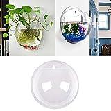 Lovelegis Wandaquarium - Glasfisch - Vase - Wandgestaltung - Wasserkulturpflanzen - 9 cm - im...