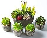 Jobary Set mit 5 künstlichen Sukkulenten mit Töpfen (einschließlich 10 Pflanzen), Bunten und...