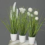 mucplants Kunstpflanze Gras im weißen Topf 3 Stück Höhe 38cm Grün/Creme Kunstgras Ziergras...
